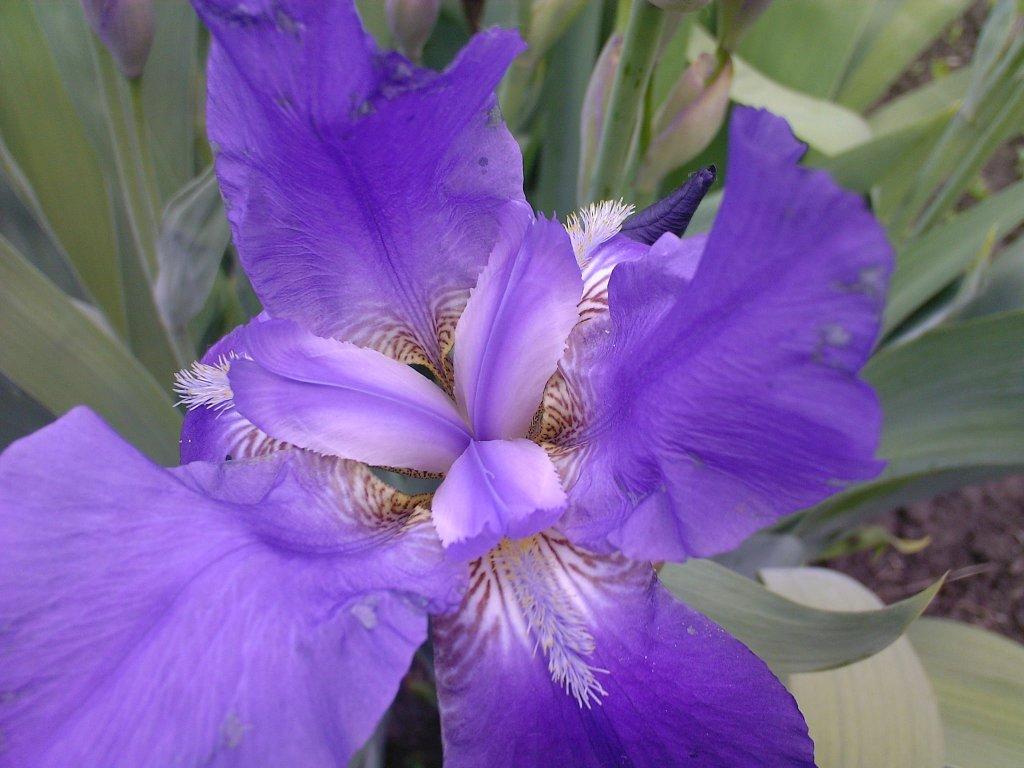Цветы на клумбе-1